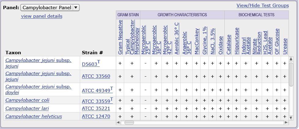 Frozen Dynamic Columns in UI for ASP NET AJAX Grid - Telerik