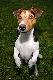 petr avatar