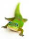 GreenLizzard avatar