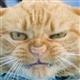 Antipod avatar