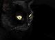Goldfy avatar