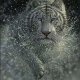 TRW avatar