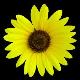Saravanan avatar