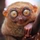 Nategadj avatar