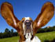 DogEars avatar