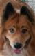 Gunther avatar